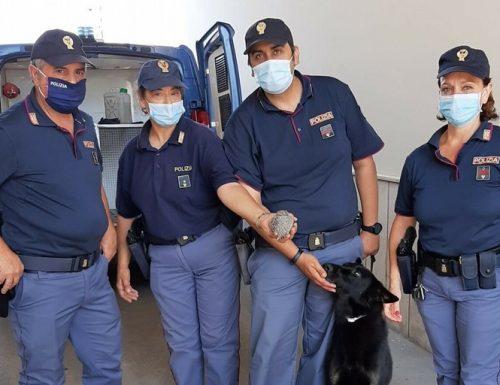 Un riccio di terra rimane incastrato fra i binari, lo salva il cane poliziotto