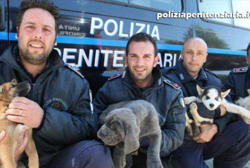 La Polizia Penitenziaria adotta i randagi e li trasforma in cani-poliziotto antidroga